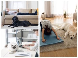 decorar tu casa con animales