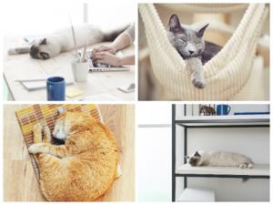 decorar tu casa con gatos
